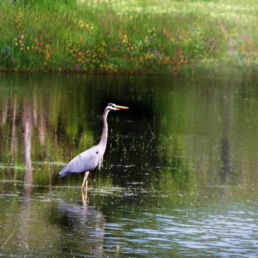 Heron with Flowers CON_edited-2